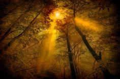 Photo Resplandor en el bosque by Jose Luis Mieza on 500px