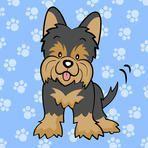 Black Yorkshire terrier puppy