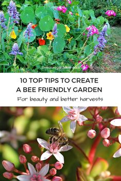 Discover easy ways to design a bee friendly garden. Helpful tips on how to attract and feed bees, increase pollination and your harvests, best flowers to grow and create safe habitat. Bee Supplies, Garden Supplies, Organic Gardening, Gardening Tips, Sustainable Gardening, Bee Friendly Flowers, Feeding Bees, Natural Ecosystem, Butterfly Flowers