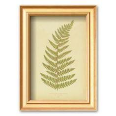 """Art.com """"Ferns"""" Framed Art Print by Edward Lowe"""