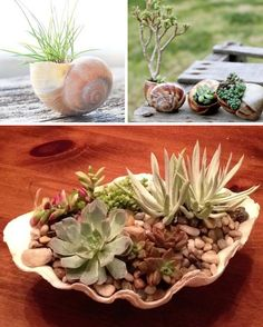 24 Creative Garden Container Ideas | Use shells for small plants!