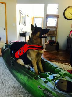Kayak Attachment For Dog Dog Lovers Unite Kayaking