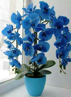orchidea Archives - My site