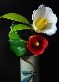 "Camelia. Saw these in Fruits Basket and wondered what they meant. ""The…"