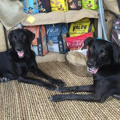 #Tongues out for some #GrandmaLucys #dogfood and #treats ❤️ Order by #noon for free #local delivery  #feedpetpurveyor #tot #tongueouttuesday #dogsofinstagram #dogs #blacklab #whippet #labrador #rescuedogs #rescuenation #dogsoftampa #dogsoftampabay #tampa #southtampa