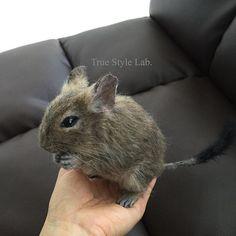 Cute Needle felted wool mice (Via @truestylelab)