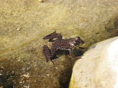 An adorable amphibian friend. Amphibians, Habitats, My Photos, Nature, Animals, Animales, Animaux, The Great Outdoors, Mother Nature