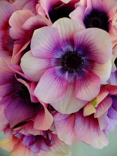 Nothing like japanese flowers!!! anemone 'Wine White'