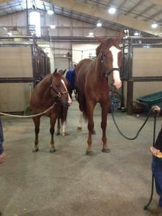 AQHA Reiner meets a hunter - two amazing athletes!