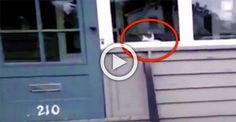 No creían al cartero que este gato hacía esto todos los días… ¡Así que lo atraparon con la cámara!