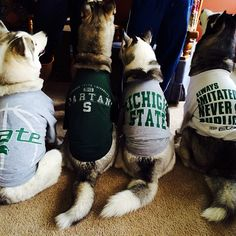 Love these dogs. They know what's up.