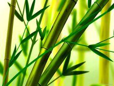 Chinese Bamboo Background