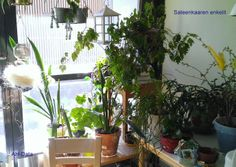 A small plant room in a flat