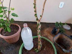 INCRÍVEL esse liquido faz sua planta florir em um mês confiram. - YouTube