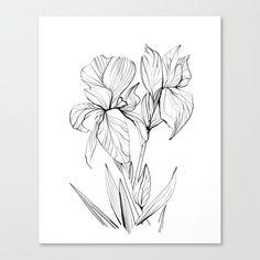Irises Canvas Print by danhobdayart Black And White Wall Art, Nature Prints, Irises, Dan, Canvas Prints, Craft, Painting, Study, Dibujo