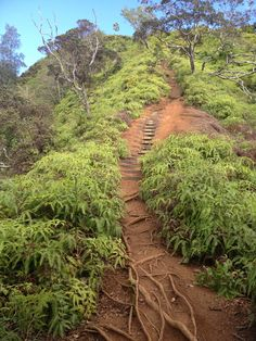 Kuli'Ou'Ou Ridge Trail, Kuli'Ou'Ou, O'Ahu, Hawaii