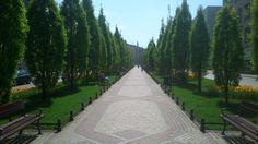 Pasaż drzew na Alejach Marcinkowskiego | Passage of trees at the Marcinkowskiego Avenue