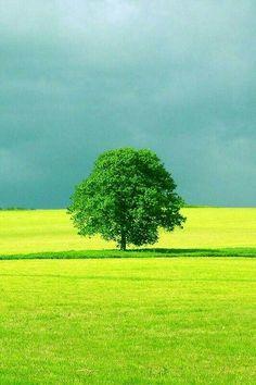 Beautiful Landscape Photography, Landscape Photos, Beautiful Landscapes, Green Nature Wallpaper, Beautiful Nature Wallpaper, Beautiful Nature Pictures, Amazing Nature, Moon Photography, Belle Photo