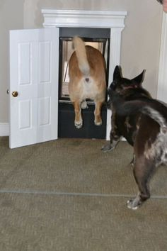 DIY Pets: Fancy Schmancy Dog Door   The DIY Adventures - upcycling, recycling and DIY from around the world
