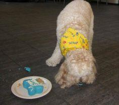 Mogie & his puppy cake on his 3rd birthday   Nov. 30, 2011