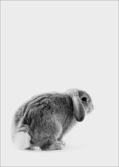 Finlay and Noa - Rabbit