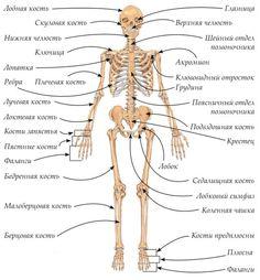 Human Anatomy Drawing, Human Anatomy And Physiology, School Motivation, Study Motivation, Back To School Organization Highschool, Medical Anatomy, Learn English Words, Purple Aesthetic, Drawing Skills