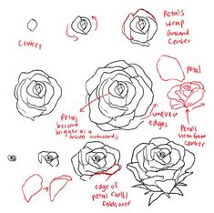 how to draw a fancy rose