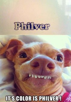 It's philver! Bahahaha I'm dying!!