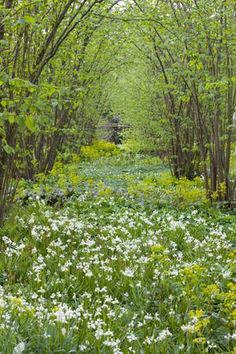 masses of white bluebells | sarah raven