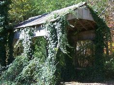 old Covered bridges pictures | ye old covered bridges... / Across tributary Chestnut Creek E. of ...