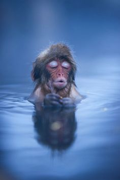 I feel you all around me Primates, Baby Animals, Funny Animals, Cute Animals, Colorful Animals, Nature Animals, Wild Animals, Coffee Quotes, Coffee Humor