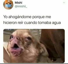 Funny Spanish Memes, Spanish Humor, Funny Relatable Memes, Funny Images, Funny Pictures, Mexican Memes, Motivational Picture Quotes, Animal Jokes, New Memes
