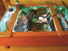 People build a beautiful turtle habitat & then make it ugly with that wood.  ? ?