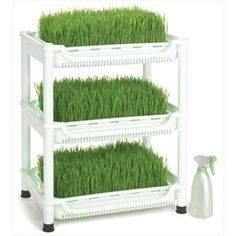 Sproutman's Wheatgrass Grower Raw Nutrition Canada
