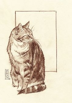 Beautiful tabby cat Tigris. Illustration by Gilles Vranckx.