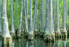 Francis Marion National Forest, SC