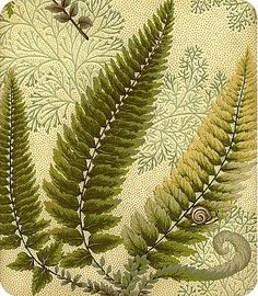 Woodland in Moss - olive green on cream fern print fabric - $19.98/yd