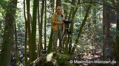 Maximilian Weinzierl – Fotografie – Blog: Spot im Wald