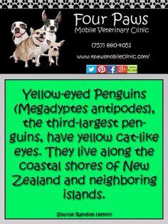 Penguin Fact Penguin Facts, Penguin Species, Gentoo Penguin, Emperor Penguin, Yellow Cat, Antarctica, Trivia, Penguins, History
