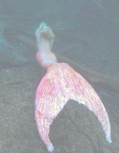 Image de mermaid, pink, and grunge Mermaid Melody, Mermaid Art, Pink Lila, Mermaid Tails, Merfolk, Magical Creatures, Pink Aesthetic, Aesthetic Pictures, Wall Collage
