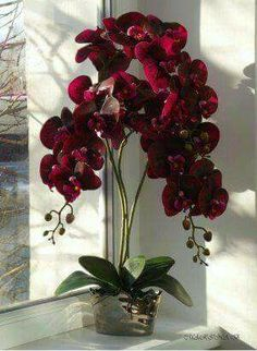 Latest Pics red Orchids Style Should you be new to everything about orchids , avoid being terrified of them. Many orchids might be