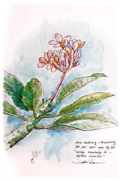 bunga kemboja by msjeje on DeviantArt