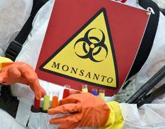 """""""Pour contourner le refus des OGM par les consommateurs, ces multinationales prétendent qu'elles n'en produisent plus. Leurs nouvelles techniques de laboratoire modifient les gènes des plantes en introduisant dans les cellules des constructions génétiques artificielles qui ne sont plus identifiables dans le produit commercialisé. En cachant ainsi son forfait, l'industrie semencière prétend qu'elle copie la nature, juste en allant plus vite. Les lois européennes ont accepté ce mensonge et…"""