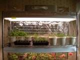 How to grow an indoor herb garden... lots of links for what herbs do well, how to water, lighting, etc.