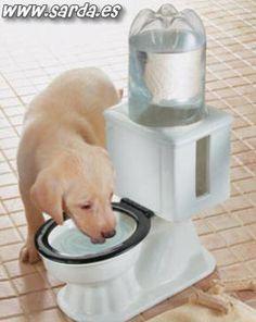 mal acostumbrado al pobre perrito :P