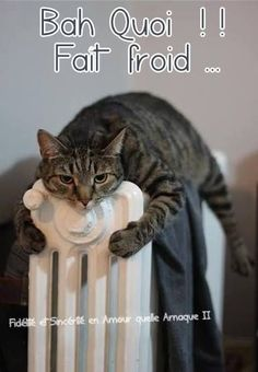 Bah Quoi !! Fait froid #froid chats radiateur chaud hiver drole humour