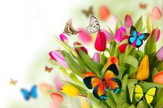 paisajes con mariposas | ๑• Confía En Cristo •๑: Imágenes para editar
