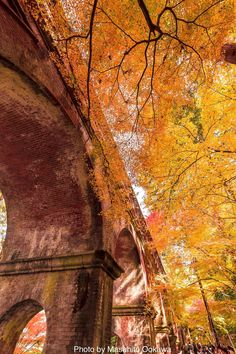 A wonderful shot of the Suirokaku Water Bridge taken at Nanzenji temple in Kyoto. Photo by 大川 正仁. Places Around The World, Around The Worlds, Cool Pictures, Cool Photos, Autumn Scenes, Shiga, Photos Voyages, Japan Photo, Kyoto Japan