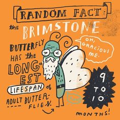 Children's Illustrator Presents Random Fun Facts as Whimsical Drawings - My…