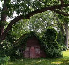 Charming red garden shed